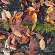 Vergehendes Herbstlaub auf verwitterter Holzbank, aus: Blätterherbstnovember