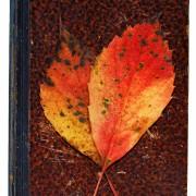 Herbstliches Konzept, aus: Herbstgedenken