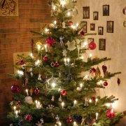 Unser Weihnachtsbaum 2014, aus: Oh – schöner – Tannenbaum
