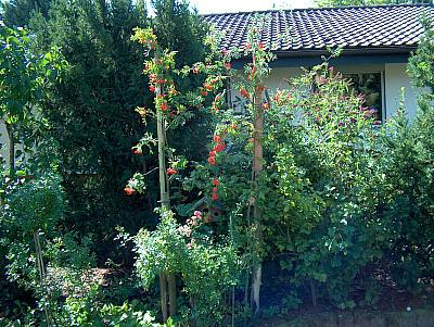 Judiths Garten