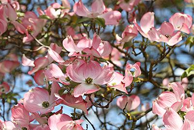 Frühlingshafte Baumblütenimpressionen