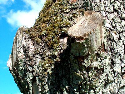 Baum-Himmel