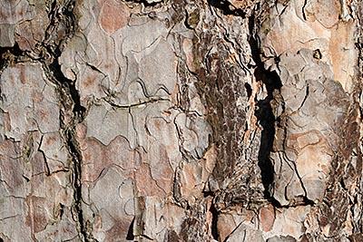 Baumrindenstruktur im Frühling