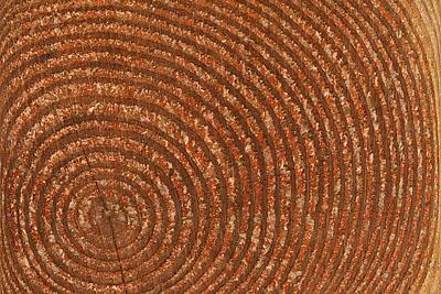 Fingerprint- Annual rings