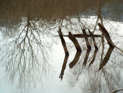 Flachwasserspiegel