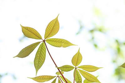 Frühlingsblätter