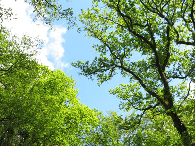 Baumkronen am Weg nach St. Gangolf