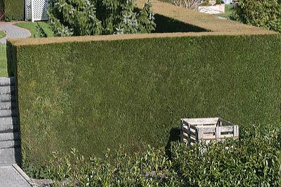 Zypressenmauer