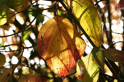 Herbst 2009 in Blättern