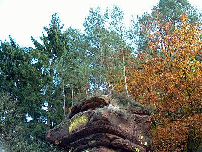 Felsenbäume