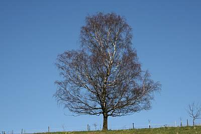 Höhenbaum