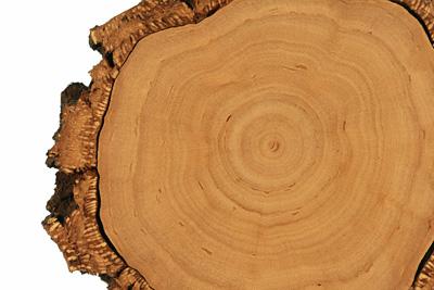 Holzstruktur-Wachstumsringe