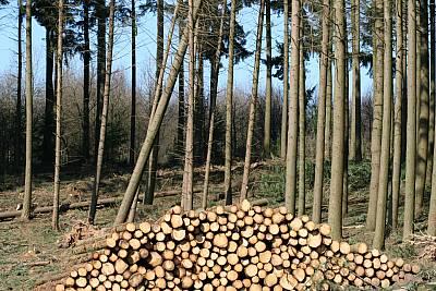 Stapelholz