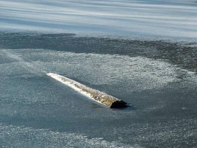 Totholz im Eis