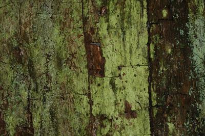 Verwitterte Oberfläche eines abgestorbenen Baums