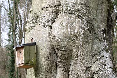 Vogelhaus an starker Buche