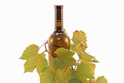 Weinranke um Weißweinflasche
