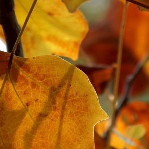 Baum-Herbst
