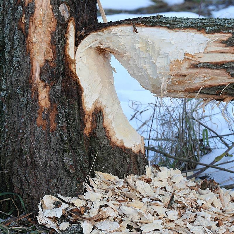 Baumfotografien - Baum-Kuriositäten
