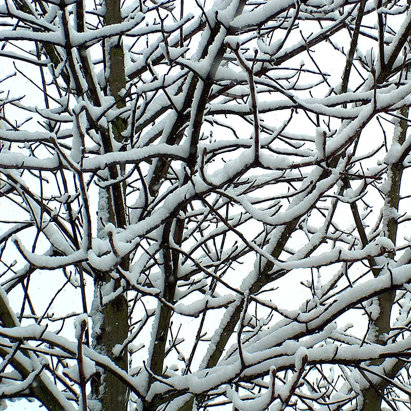 Baumfotografien - Baum-Winter