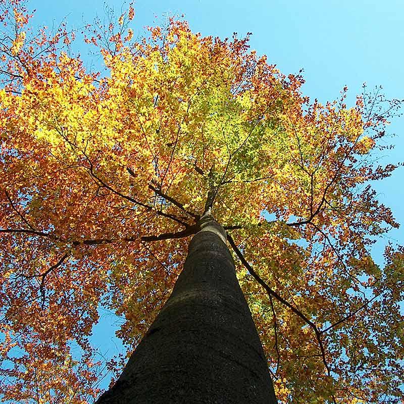 Baumfotografien - Baum-Zeiten