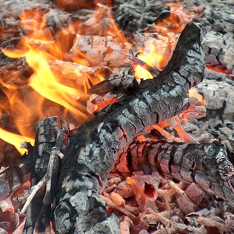 Baumfotografien - Holz-Feuer