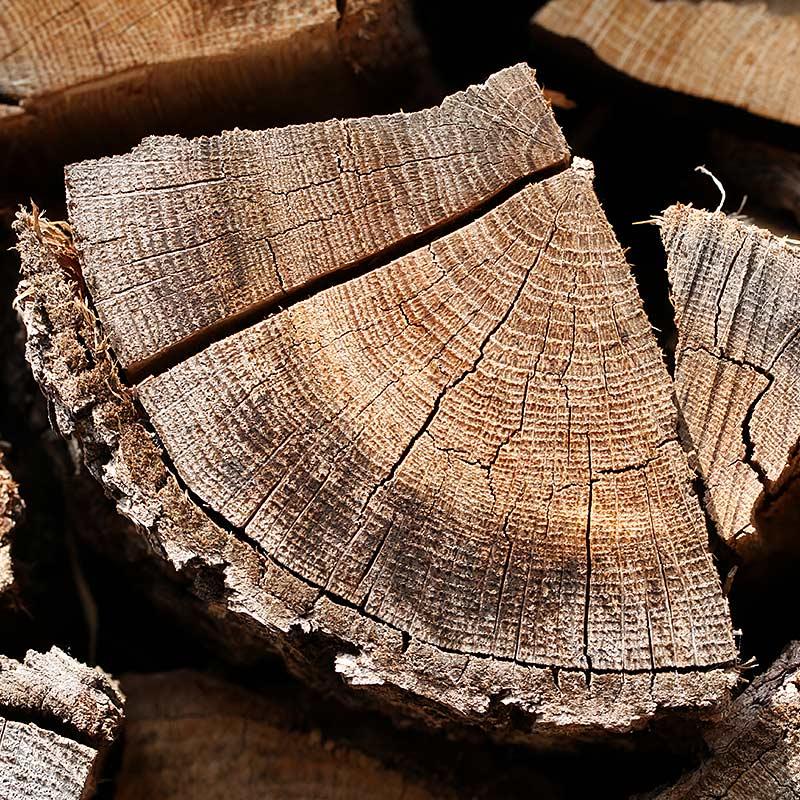 Baumfotografien - Holz-Struktur
