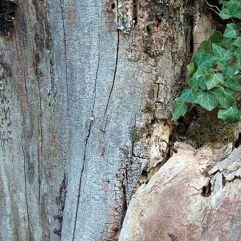 Baumfotografien - Tot-Holz