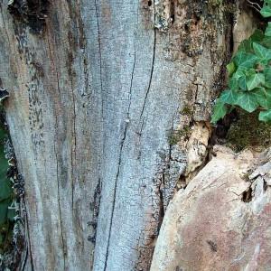Tot-Holz