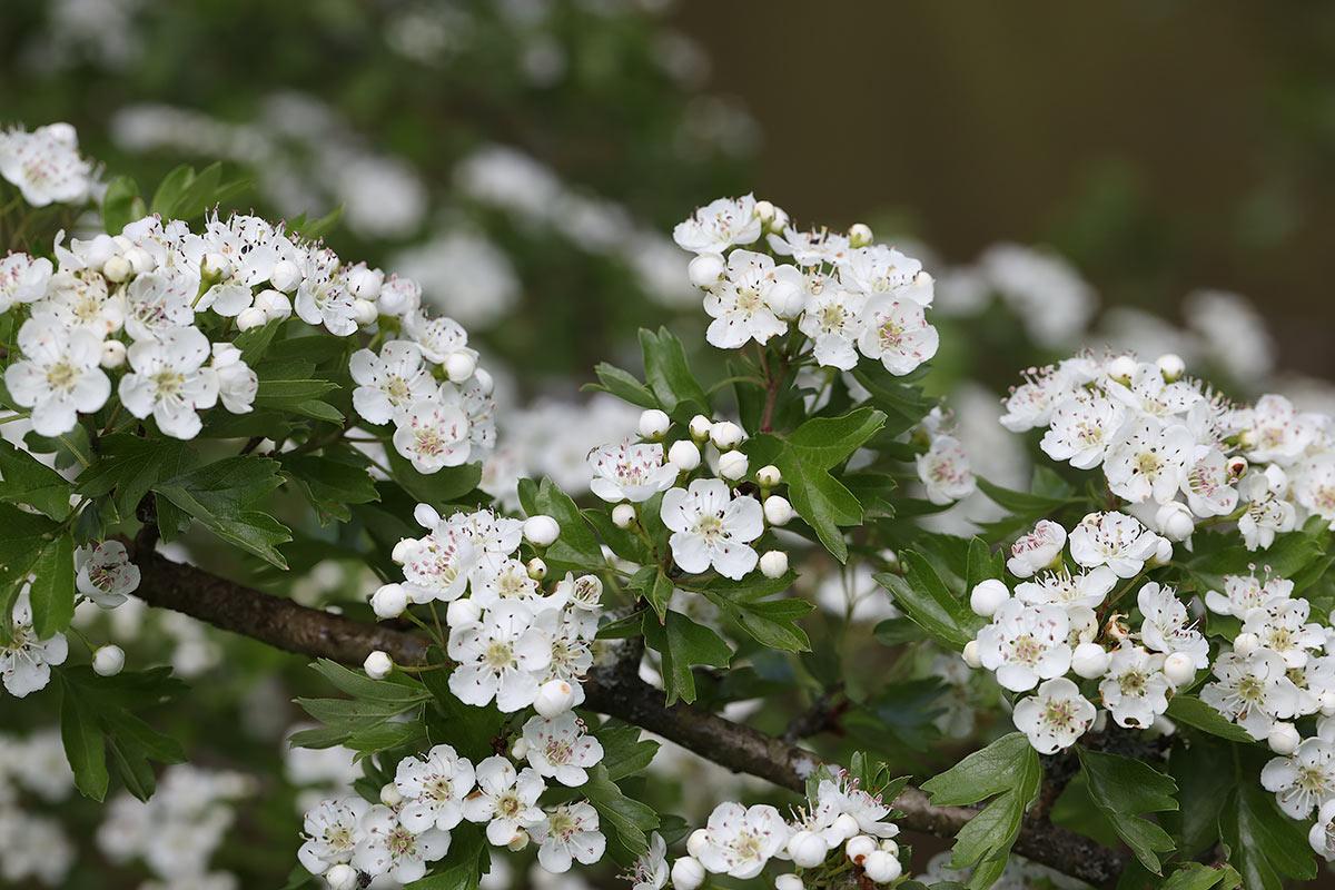Baumfrühling 2019 an der Saar