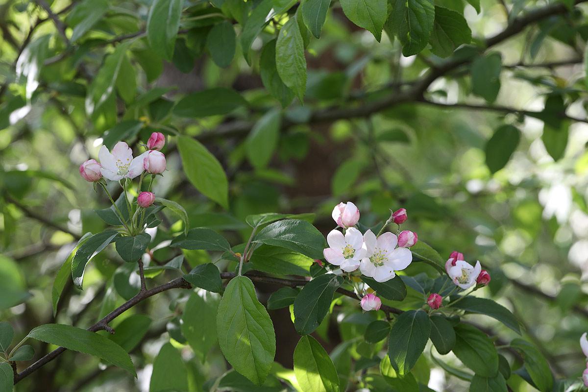 Baumfrühling 2019