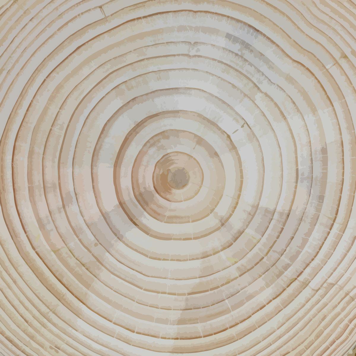 Jahresringe einer Kiefer, aus: Jahresringstruktur als Baum- und Lebenssymbol