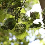 Sich auflösende Blattstrukturen im Sommerlicht, aus: Blattauflösung im Sommerlicht