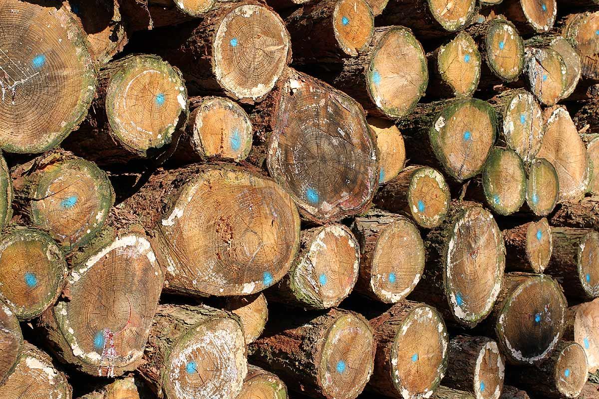 Brennholzlos II