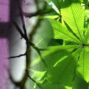 Zwischen Sündenfall und Erlösung: Der christliche Lebensbaum