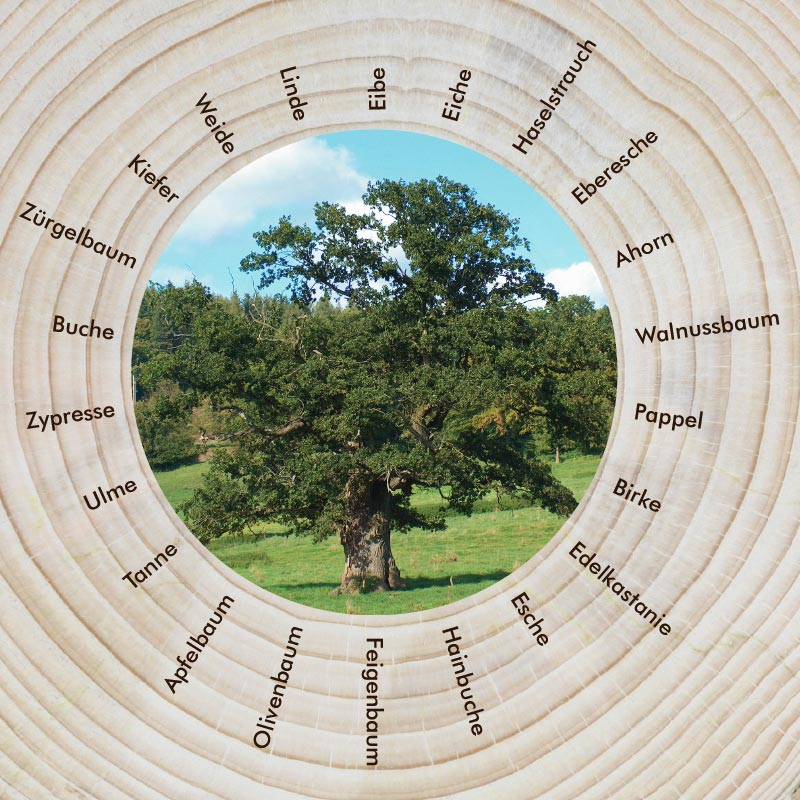 Mit den Bäumen durch das Jahr: Der keltische Baumkreis