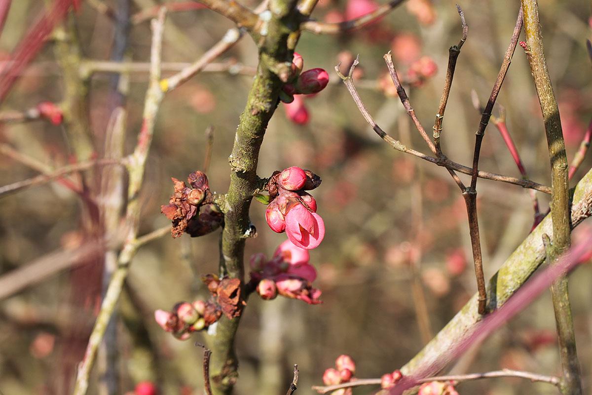 Erste Frühlingszeichen der Baumlandschaft