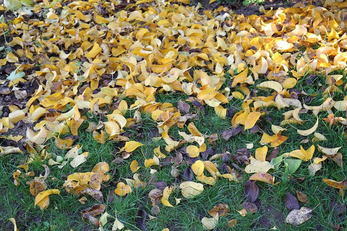 Herbstblätterteppich auf Rasen