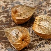 Sich auflösende Physalisfrüchte im Herbst, aus: Plastische Formen des Herbstes