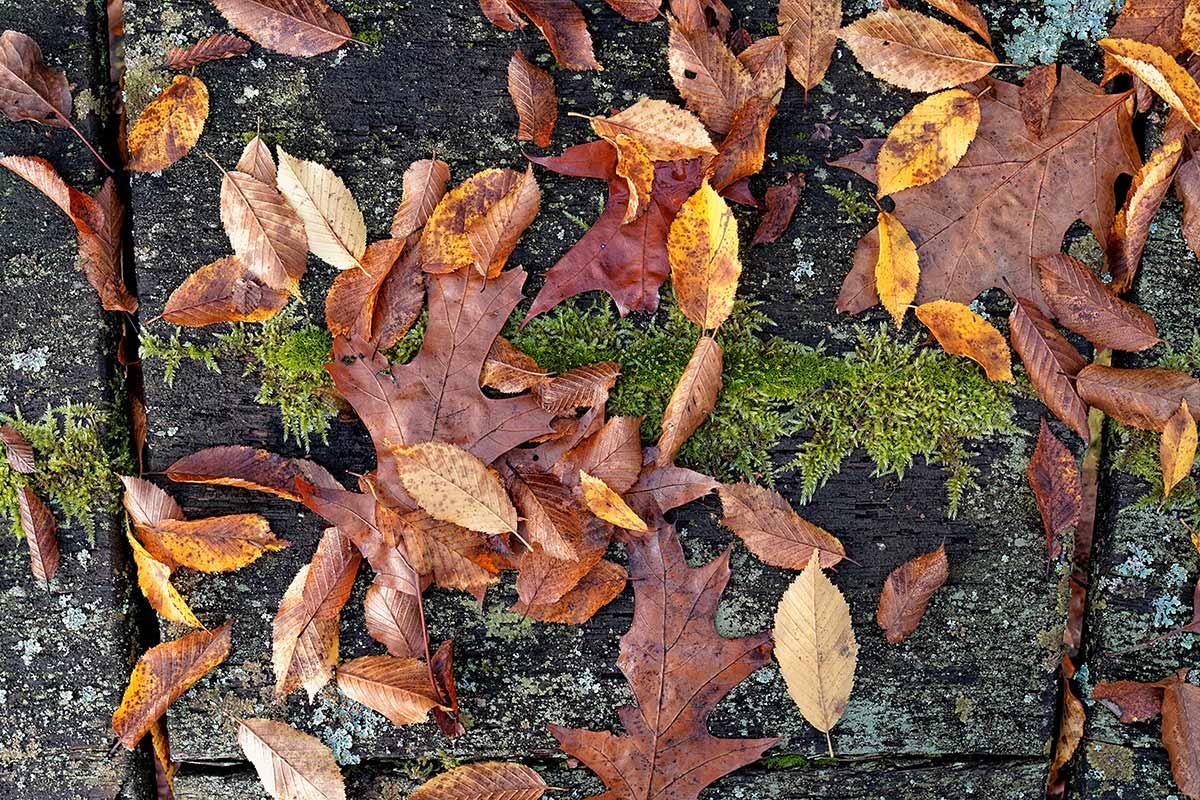 Herbstblätter 2015