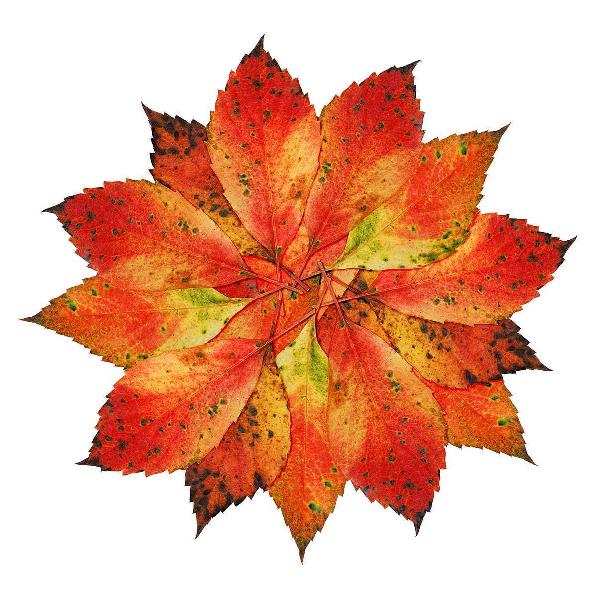 Herbstblätterarrangement
