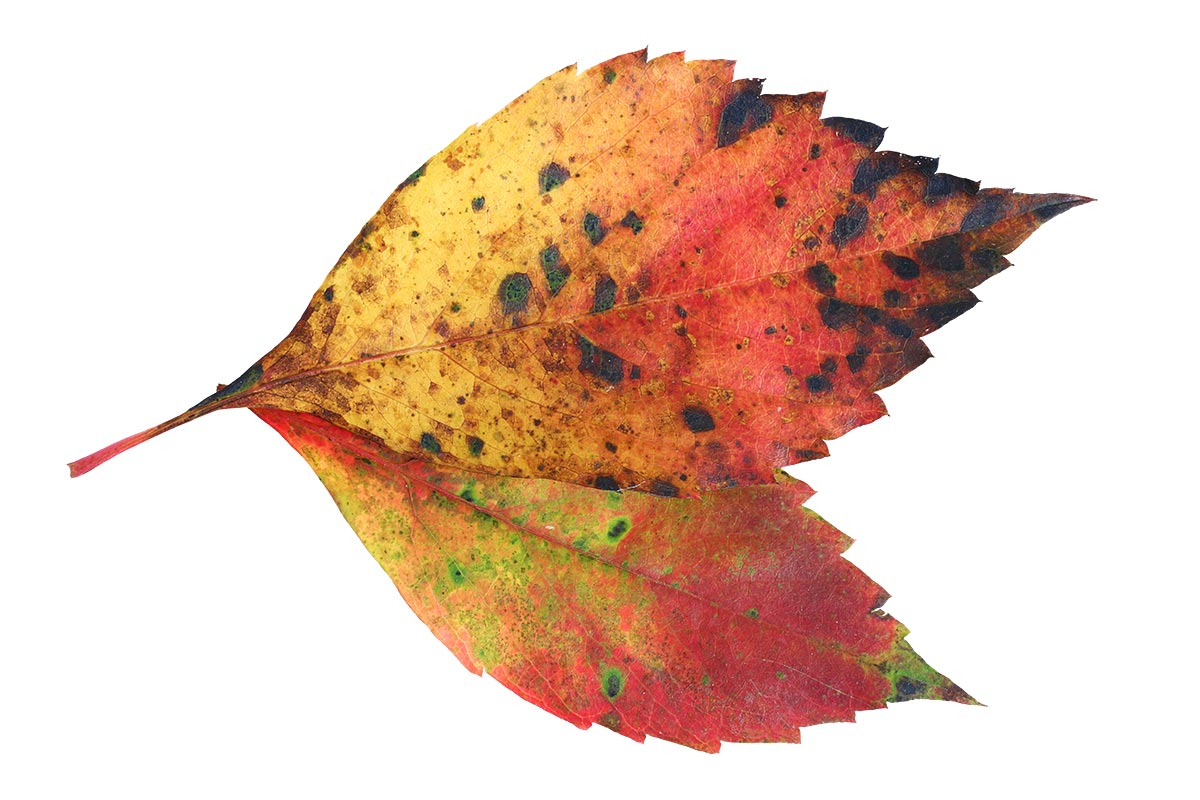 Herbstblattfarben II