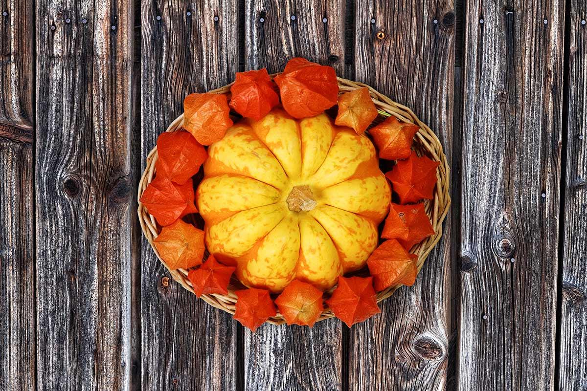 Herbstlicher Dekorationskorb mit Zierkürbis und Physalis