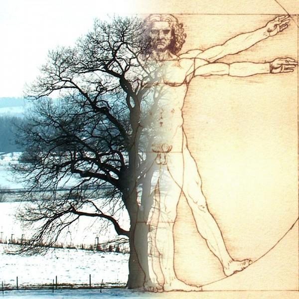 Der Baum des Lebens und die Spiegelung des Selbst