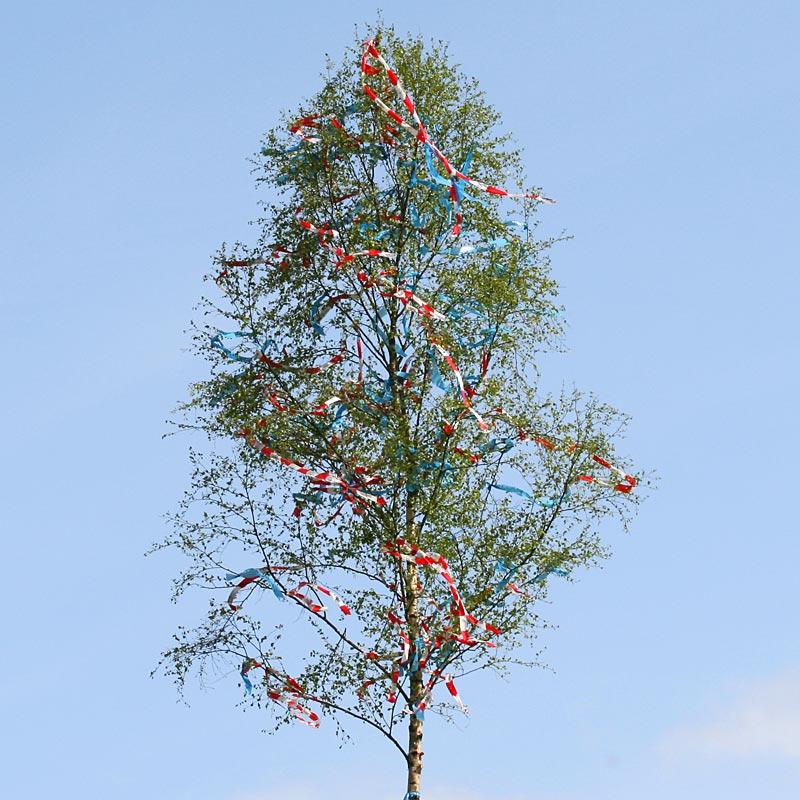 Der Maibaum - Zwischen Himmel und Menschen