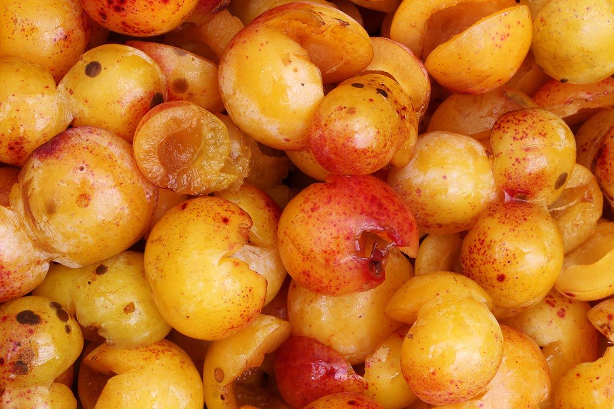 Mirabellen - entkernte vollreife Früchte