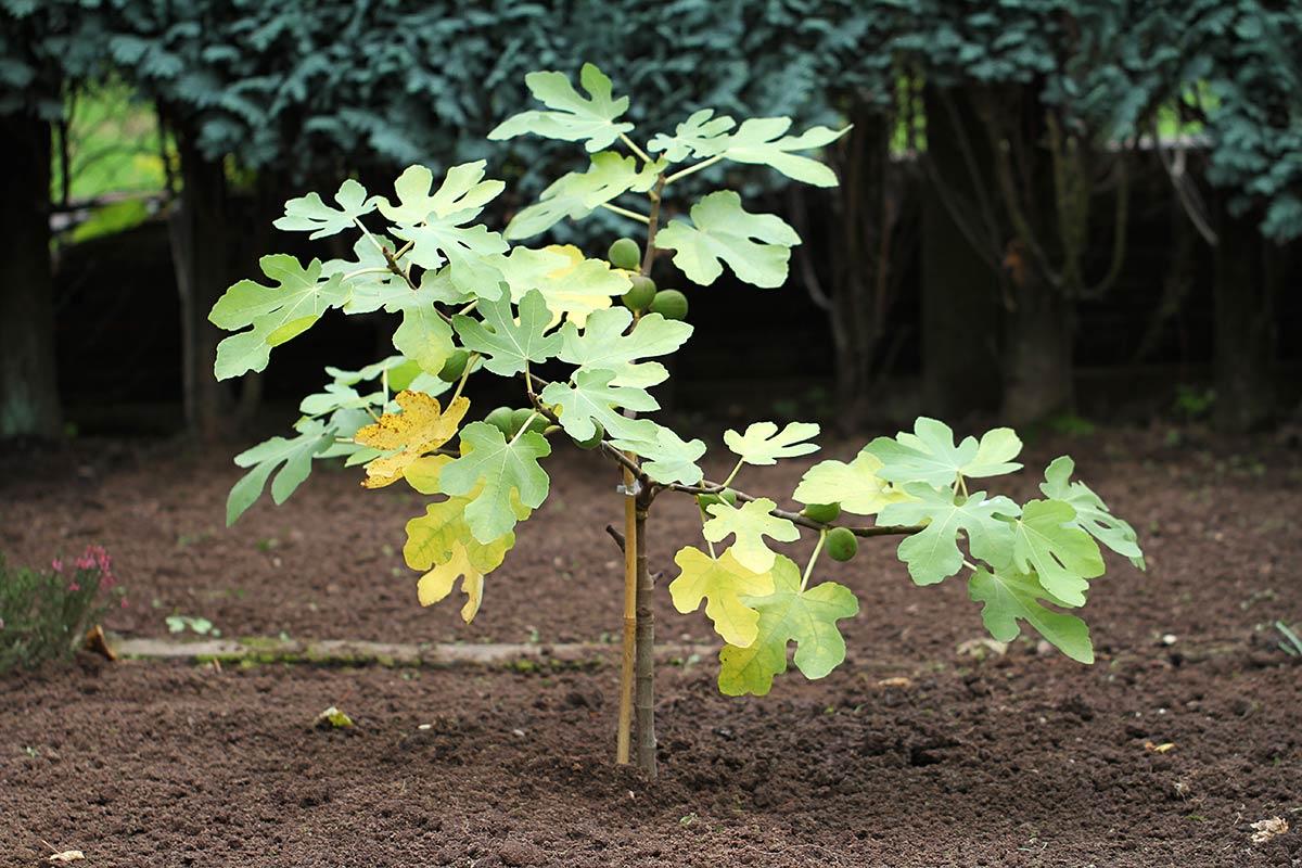 Neuer Feigenbaum 2015