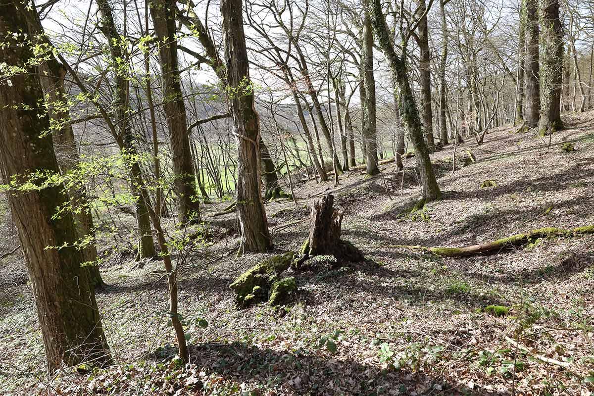 Baumlandschaft an der Saar im Frühling II