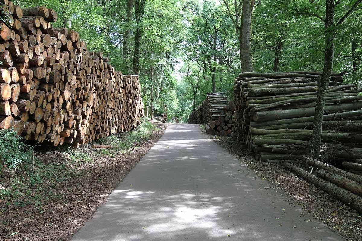 Aufgeschichtete Holzstämme am Waldrand 1
