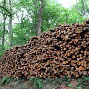 Aufgeschichtete Holzstämme am Waldrand 2, aus: Stammholzlager